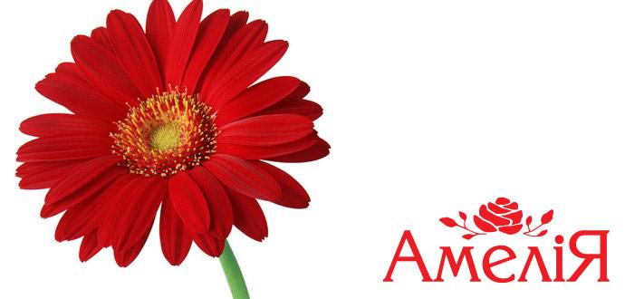 http://amelia-flowers.com/images/stories/slider/slide7.jpg